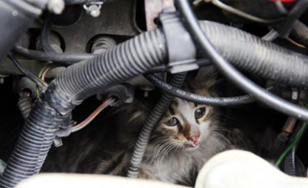 Arabanızı çalıştırırken dikkat edin!